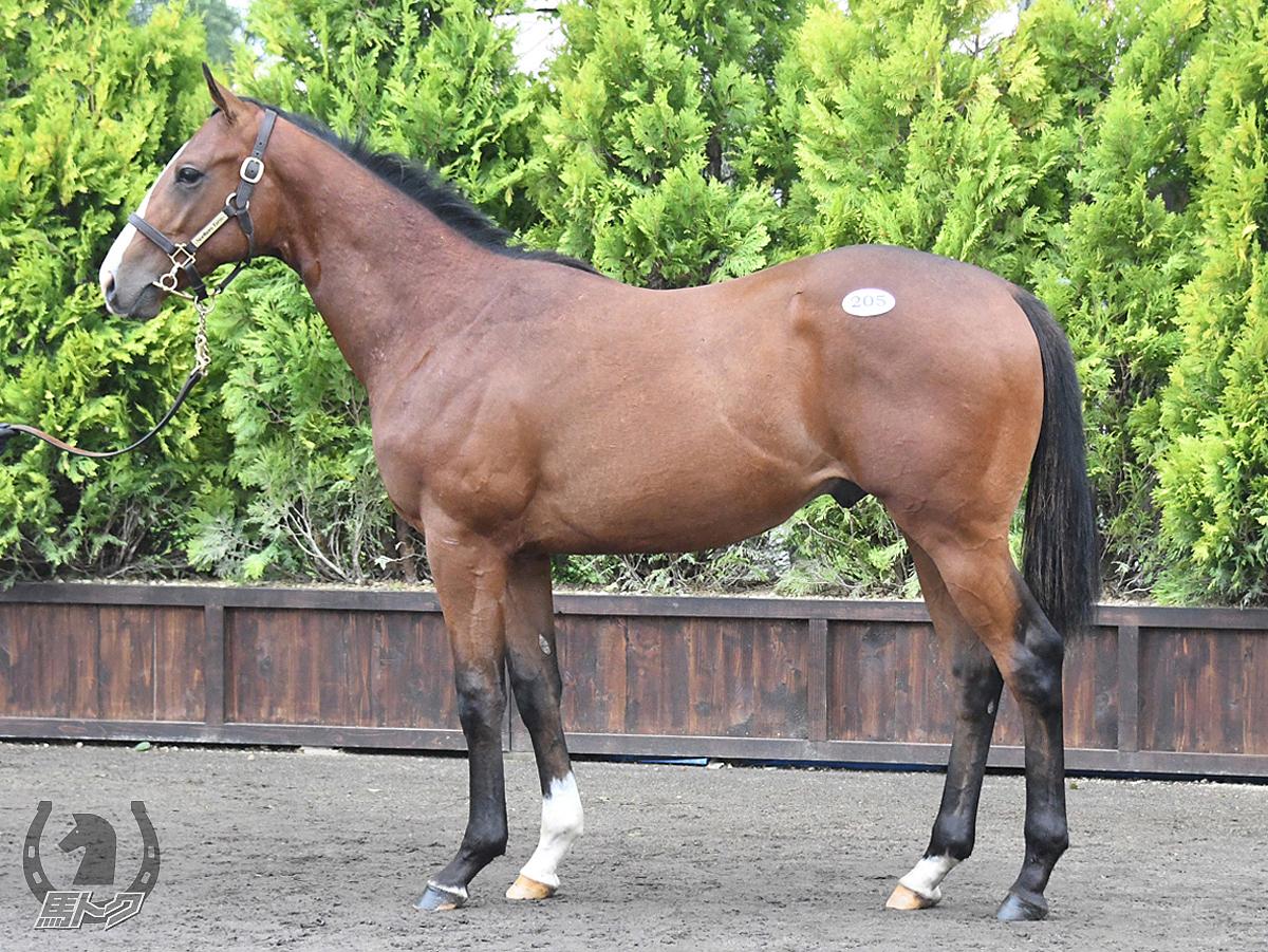 クローストゥミーの馬体写真