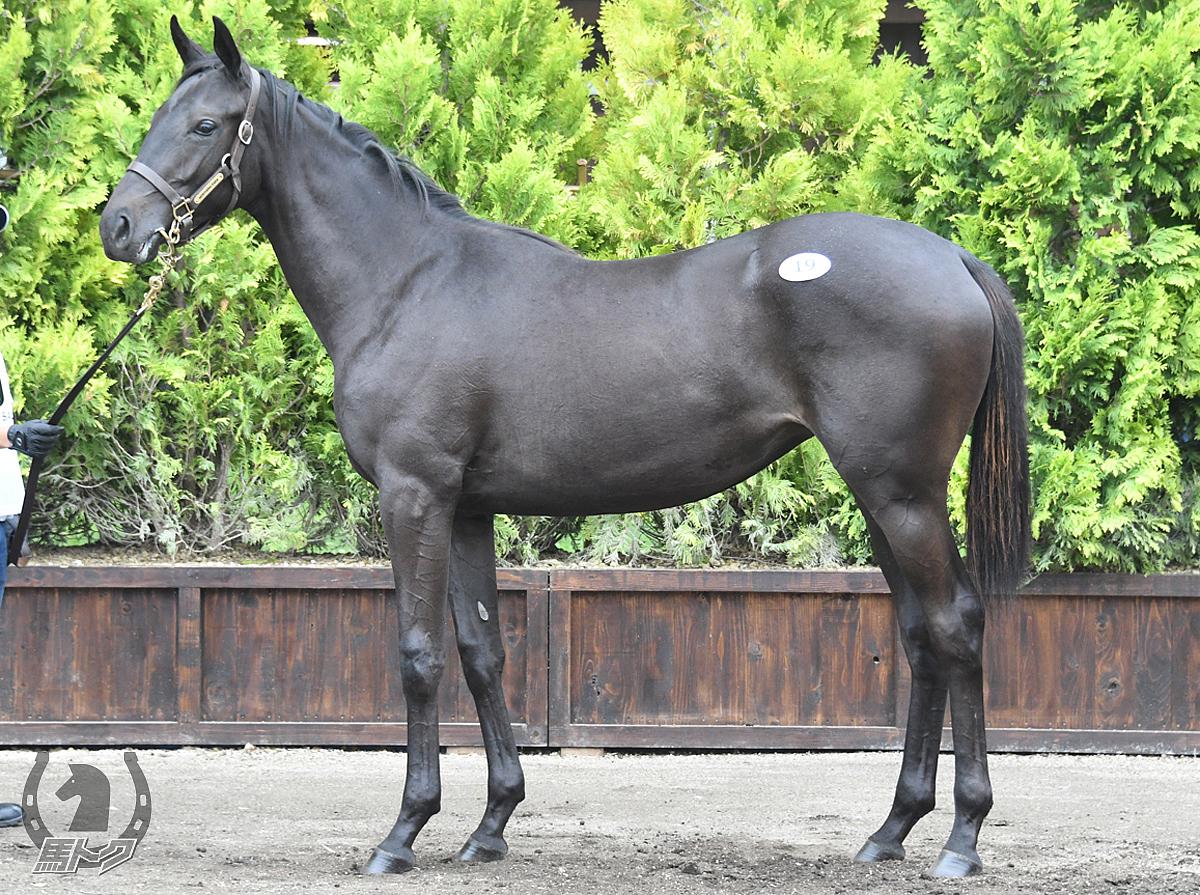 フラワリングナイトの馬体写真