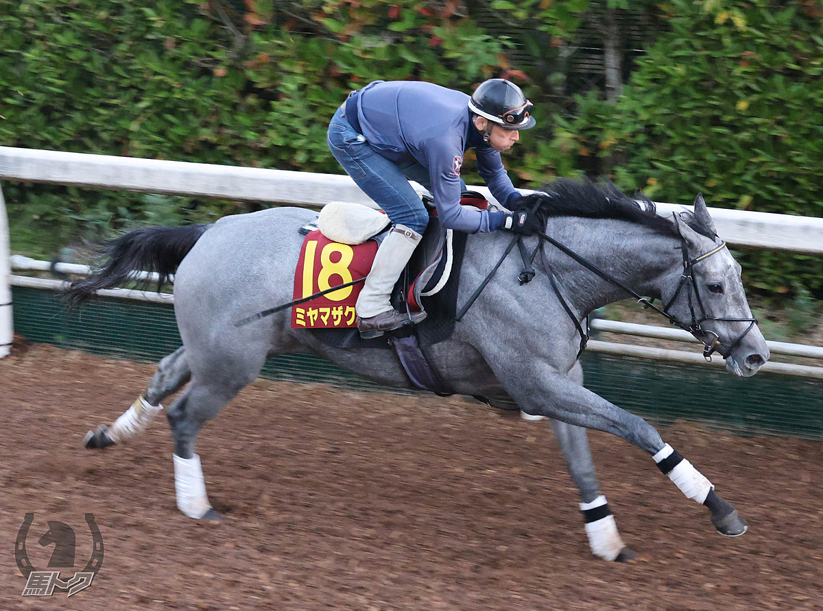 ミヤマザクラの馬体写真