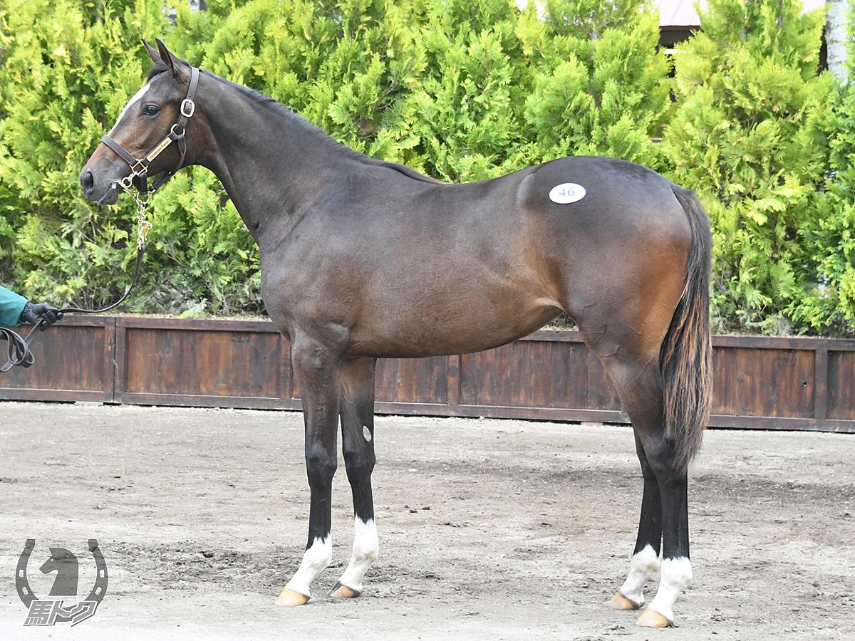 ヴィンクーロの馬体写真