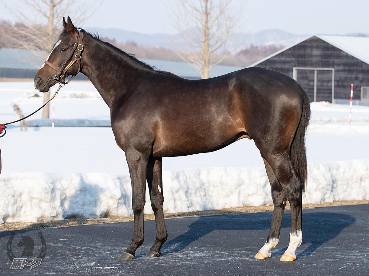フォアシュピールの馬体写真