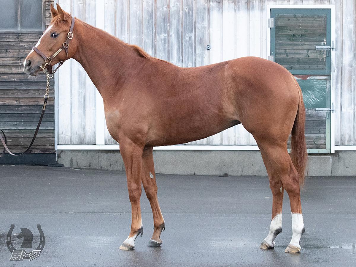 フラムエトワールの馬体写真