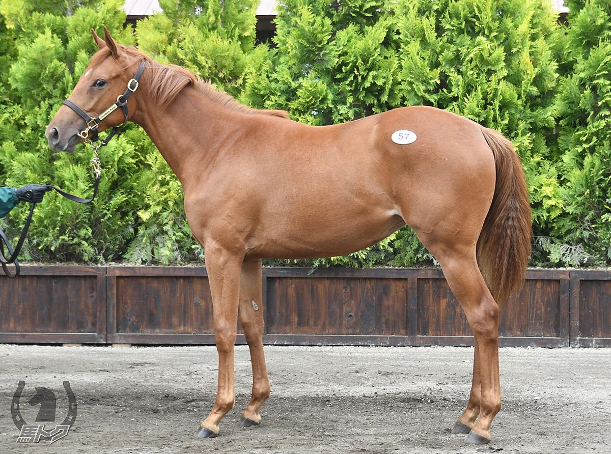 カペラの馬体写真