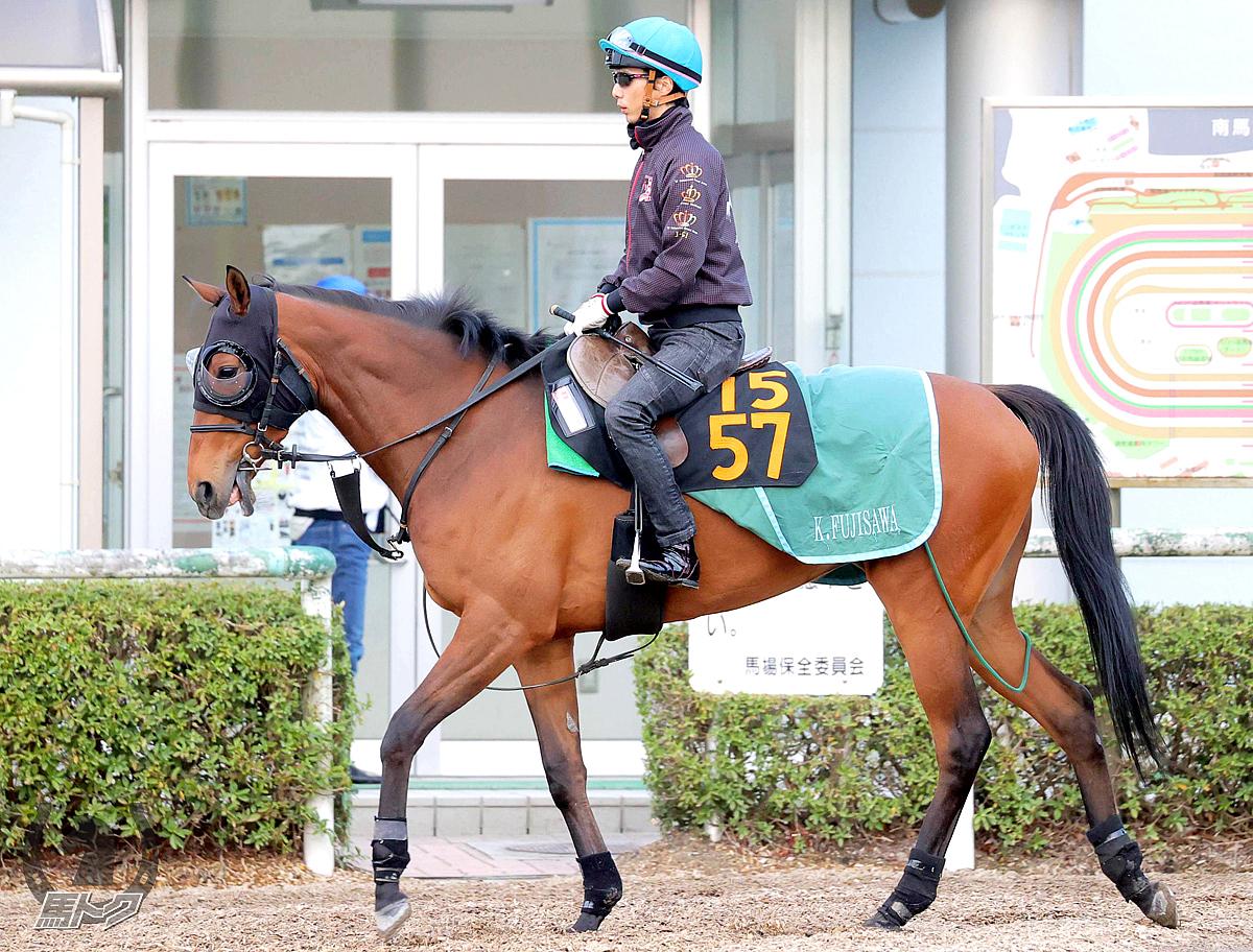 レッドルレーヴの馬体写真