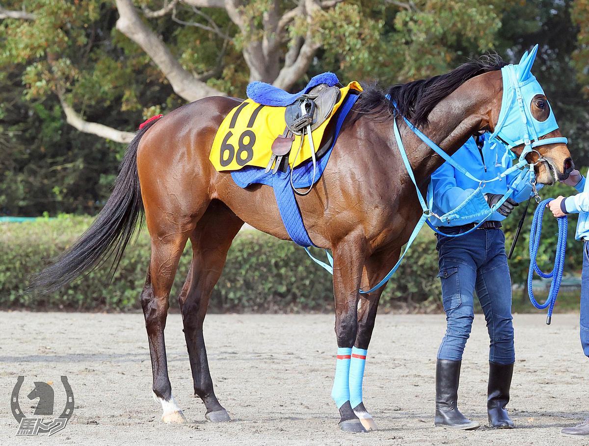 テルツェットの馬体写真