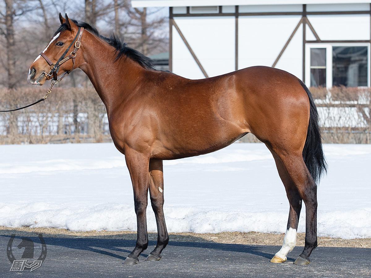 アステリアの馬体写真