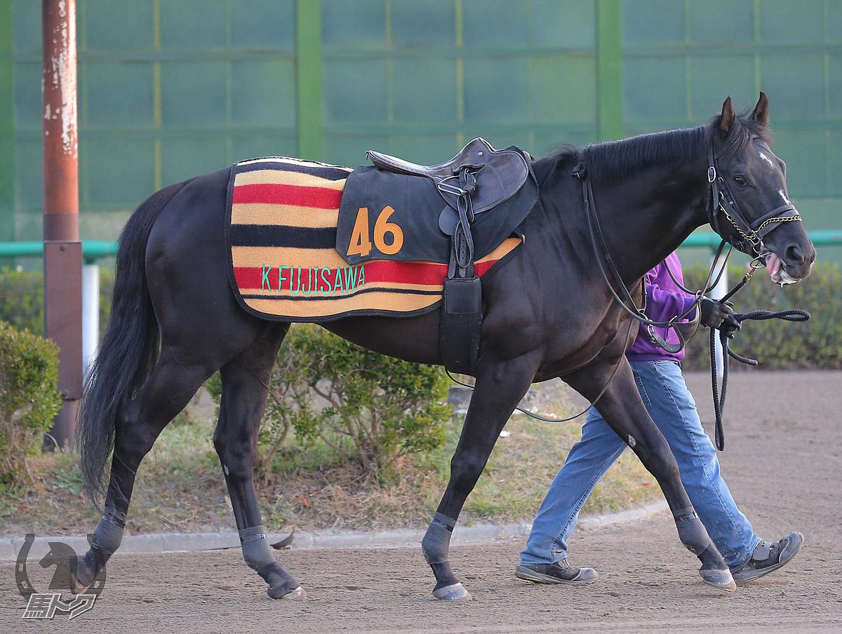 アブソルティスモの馬体写真