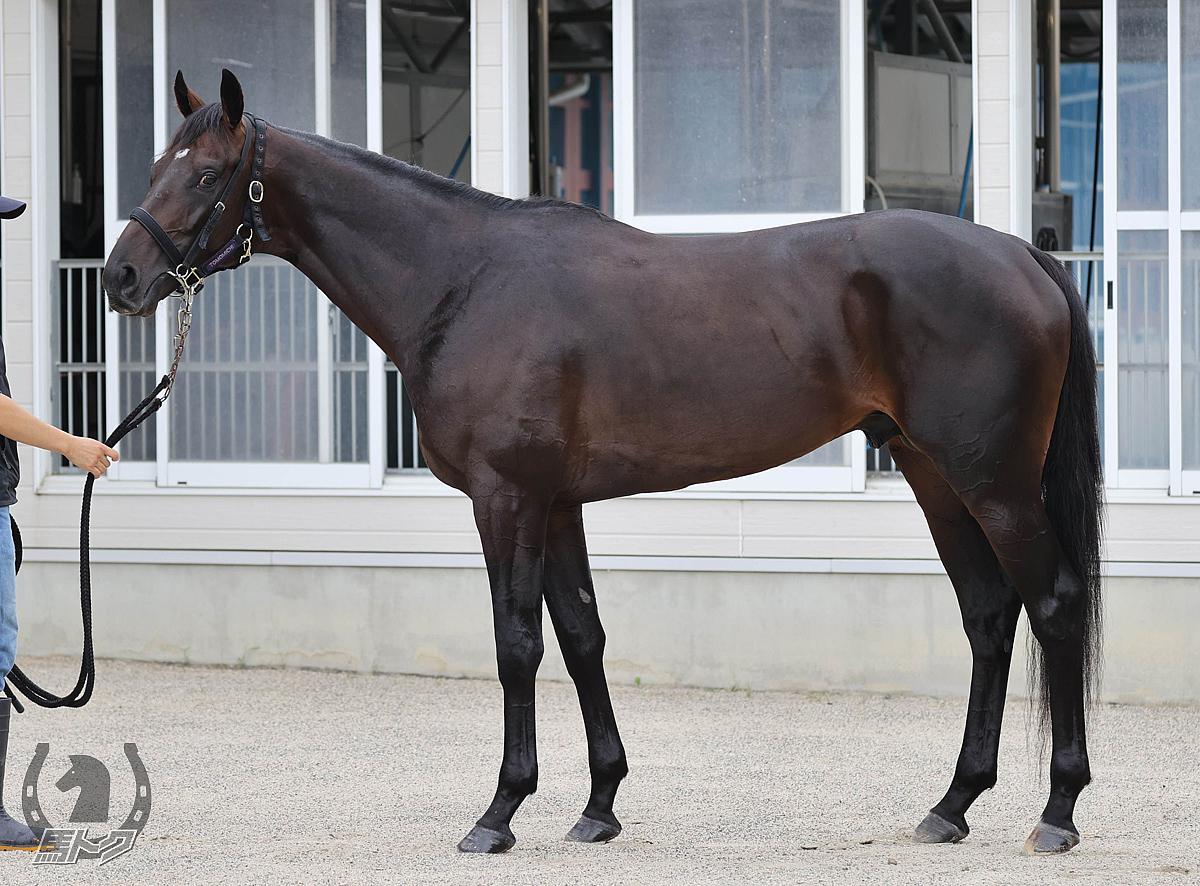 ヴァルコスの馬体写真
