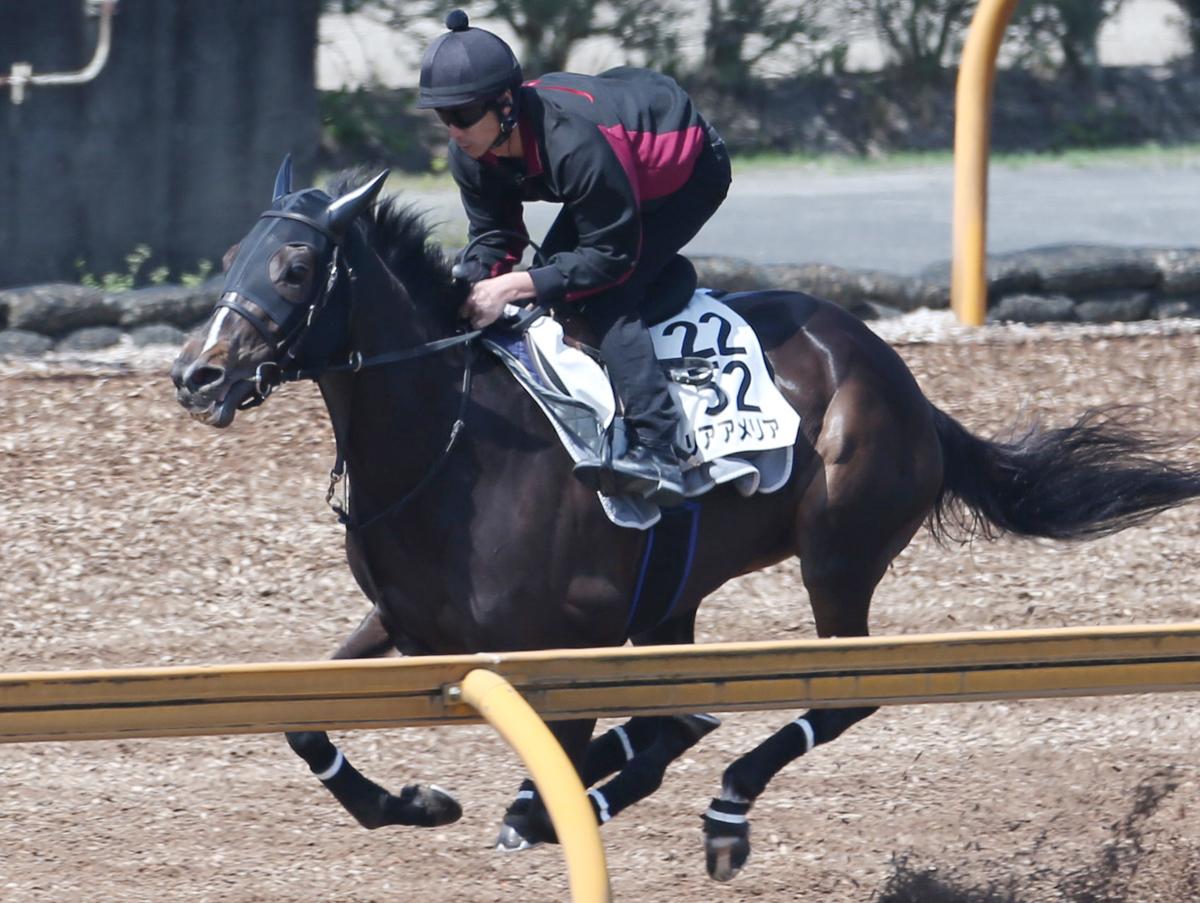 リアアメリアの馬体写真