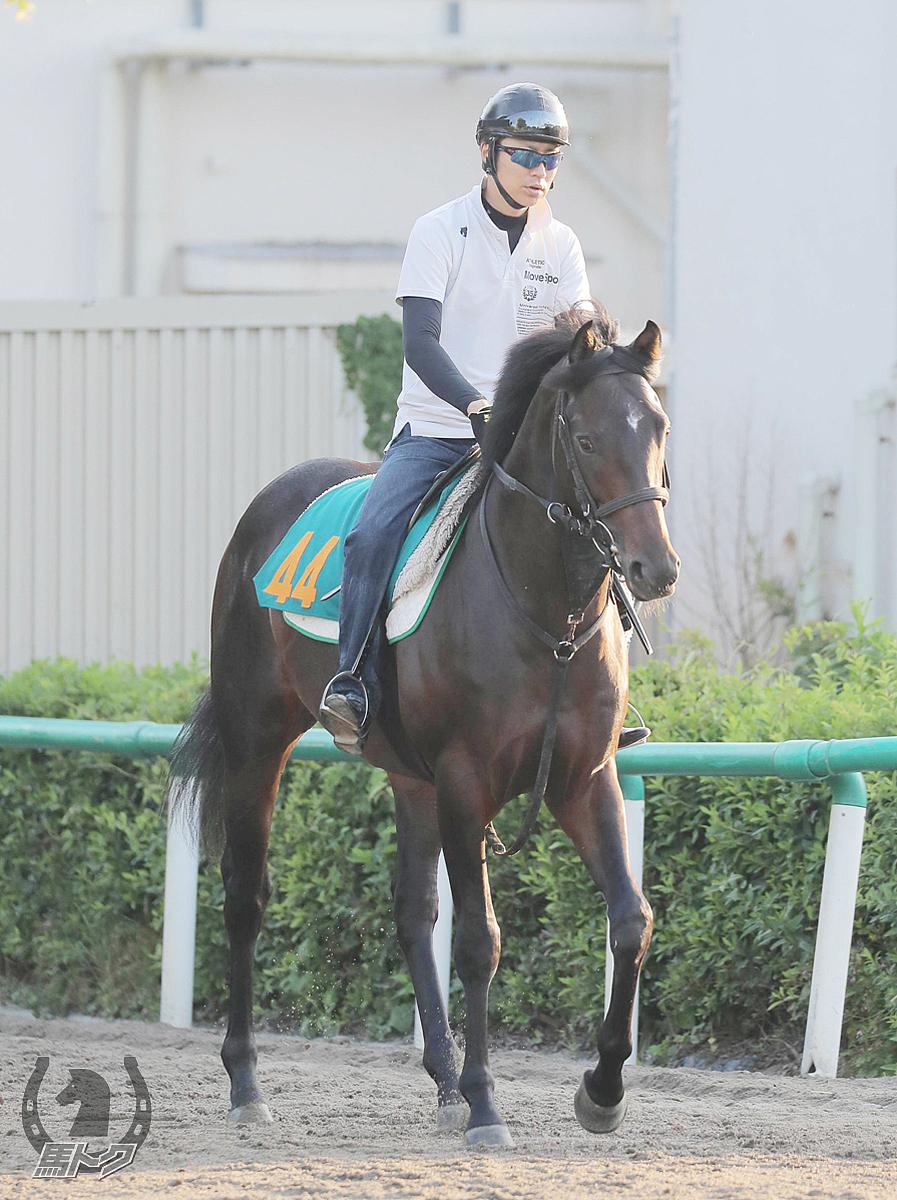レインカルナティオの馬体写真