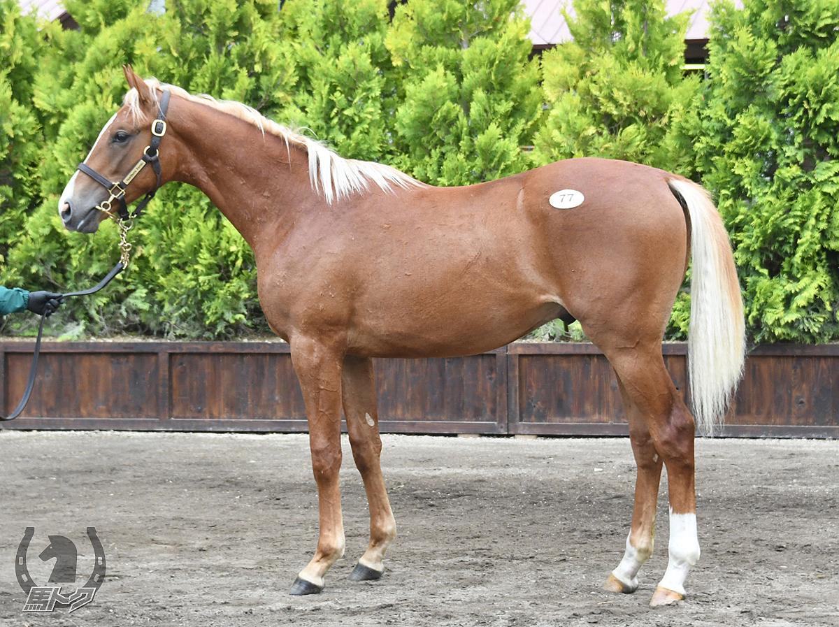 ミッキーパンチの馬体写真
