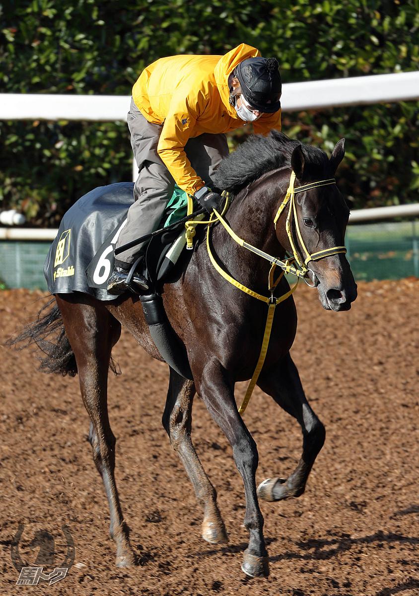 ルーツドールの馬体写真