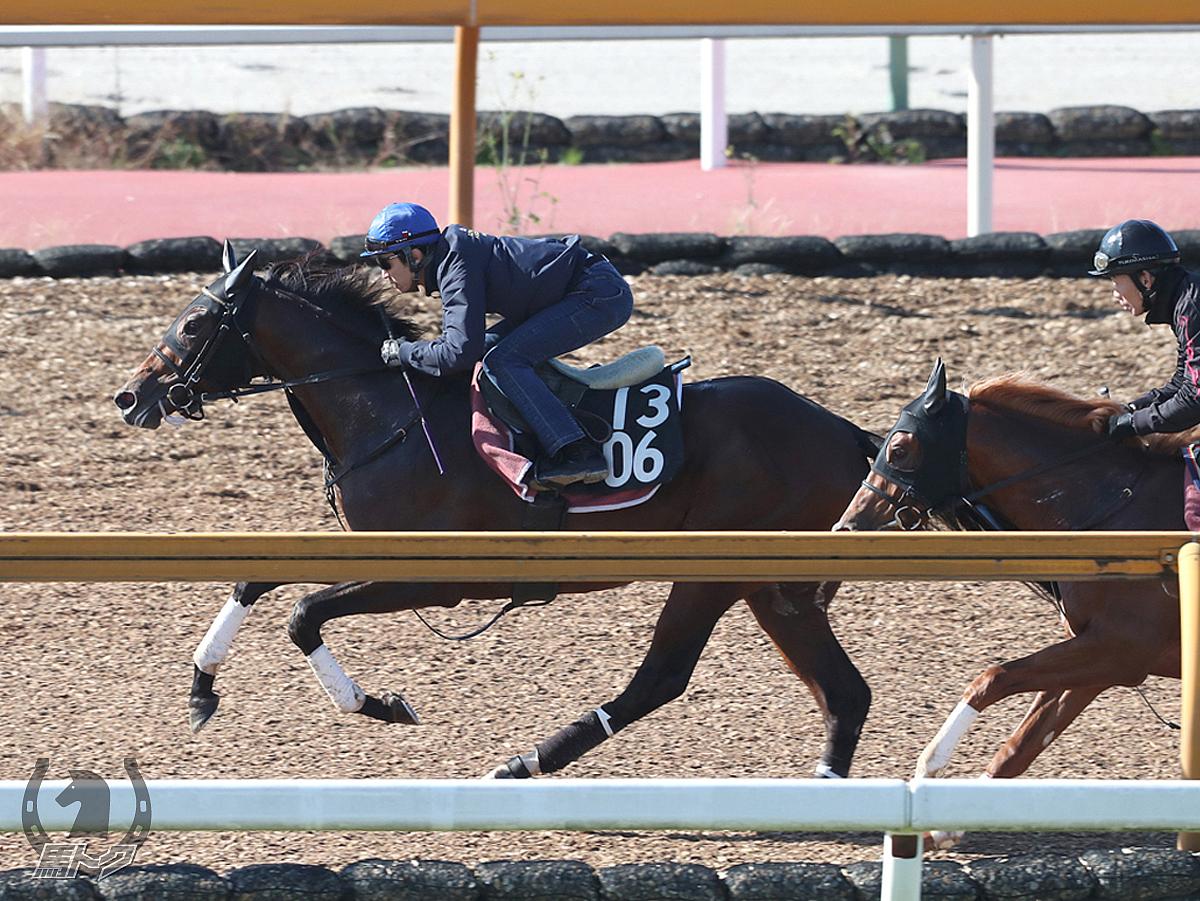 レッドベルジュールの馬体写真
