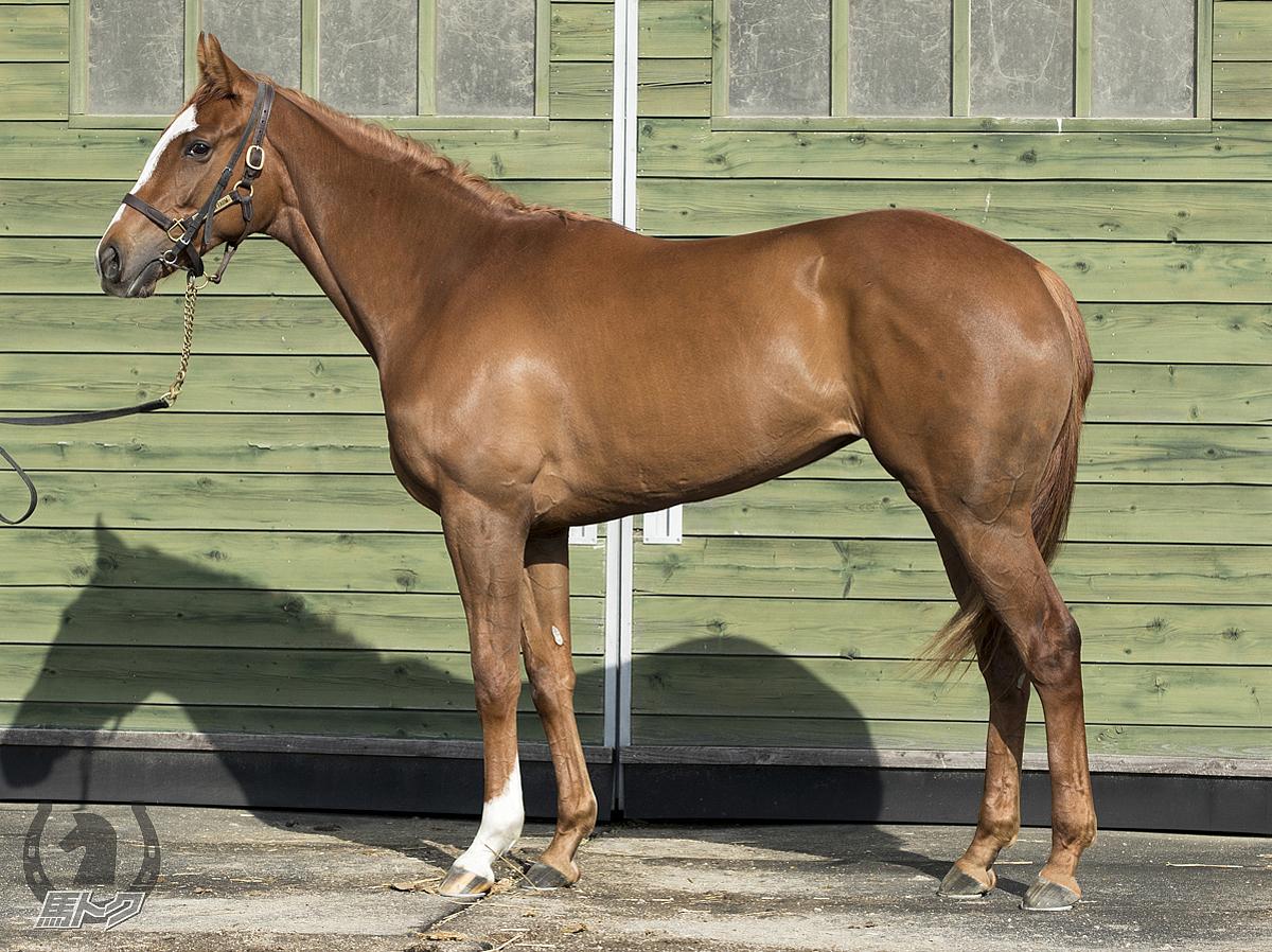レッドフラヴィアの馬体写真