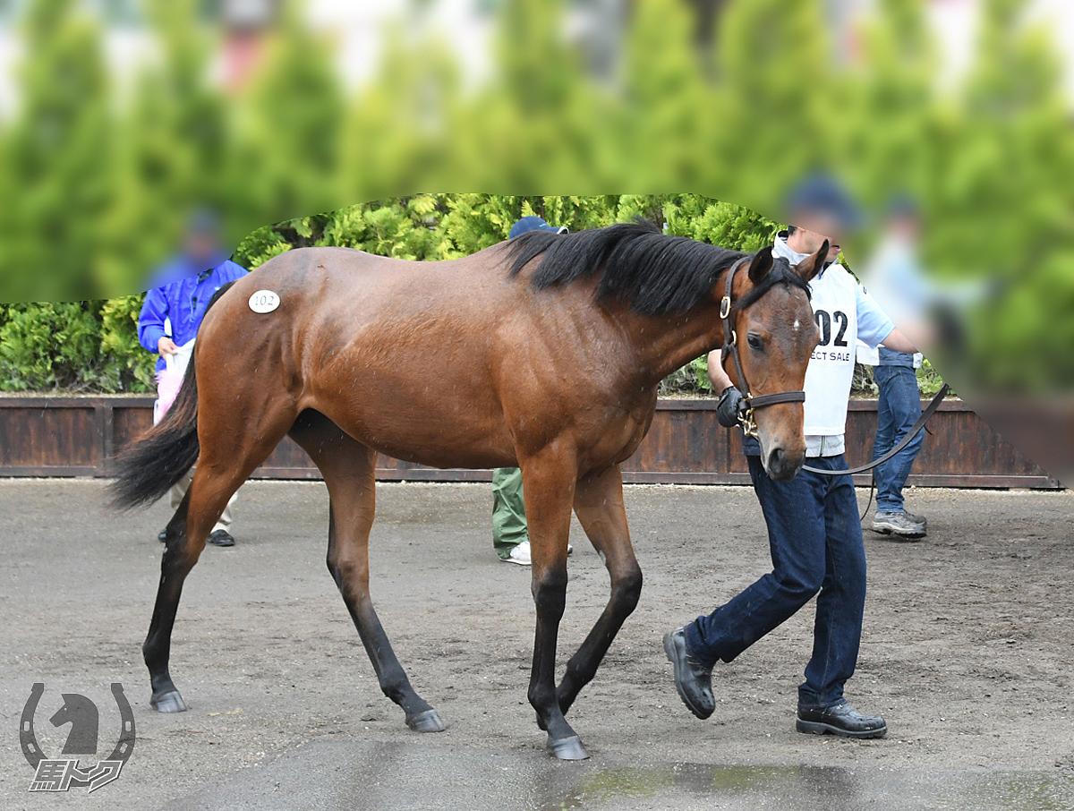 アドマイヤアリエルの馬体写真