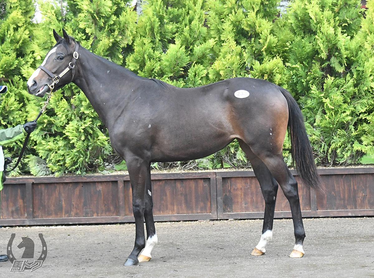 ピーエムピンコの馬体写真