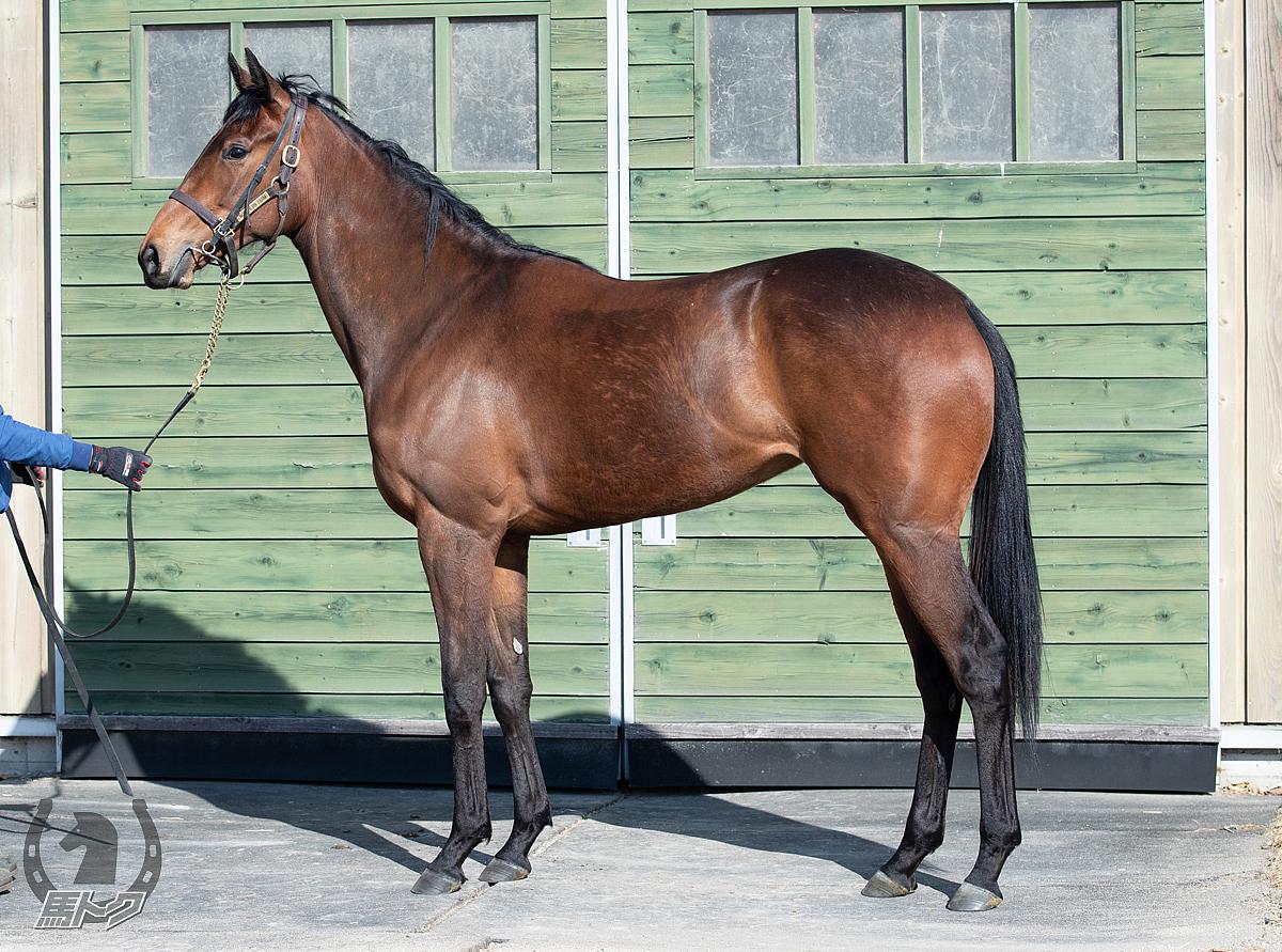 バルバレスコの馬体写真