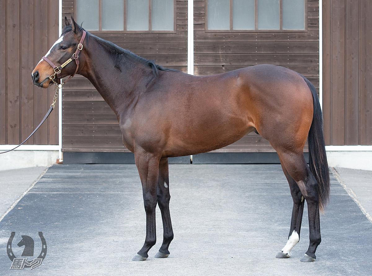 シャークスコーブの馬体写真
