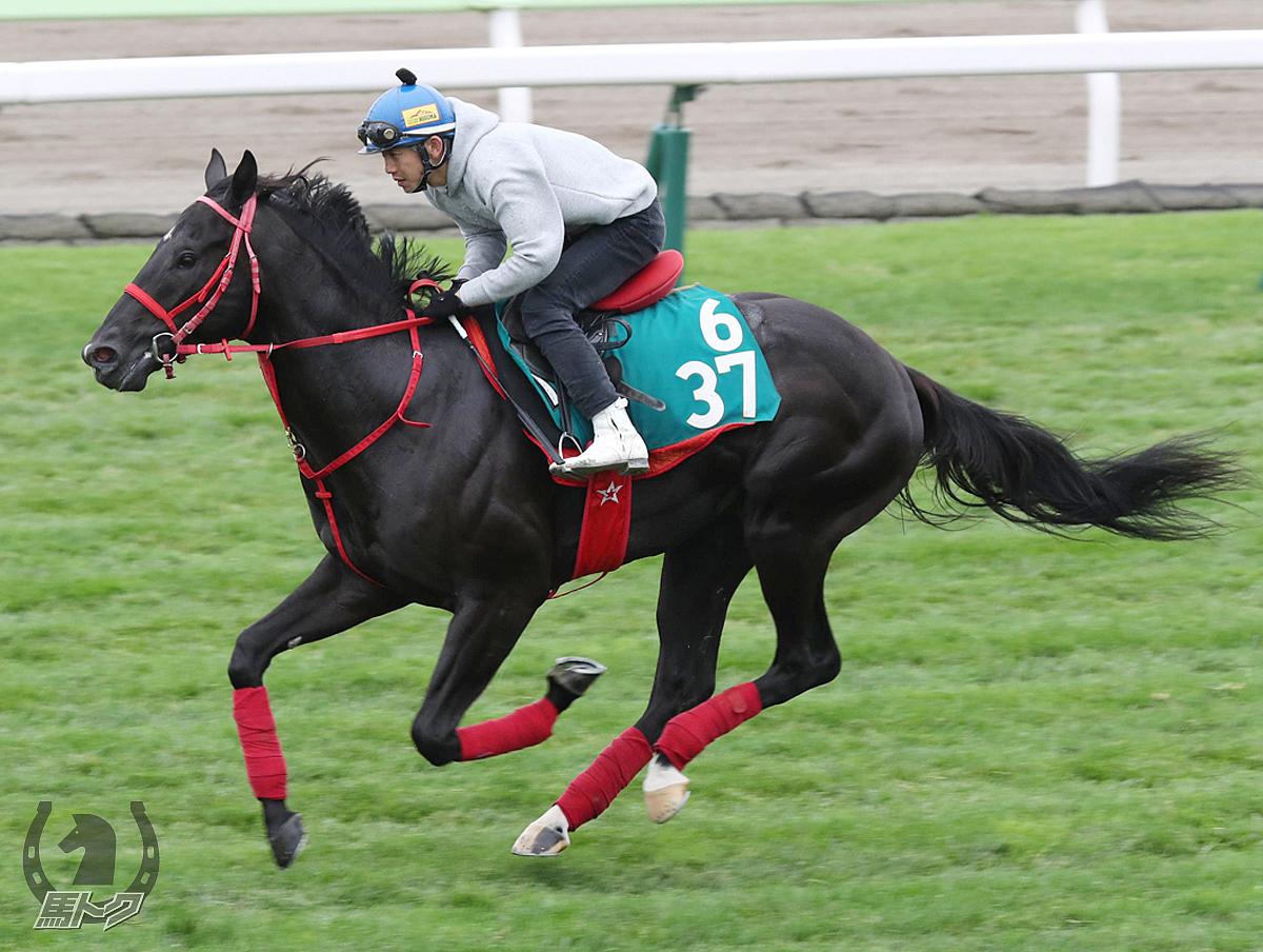 リュウノゲキリンの馬体写真