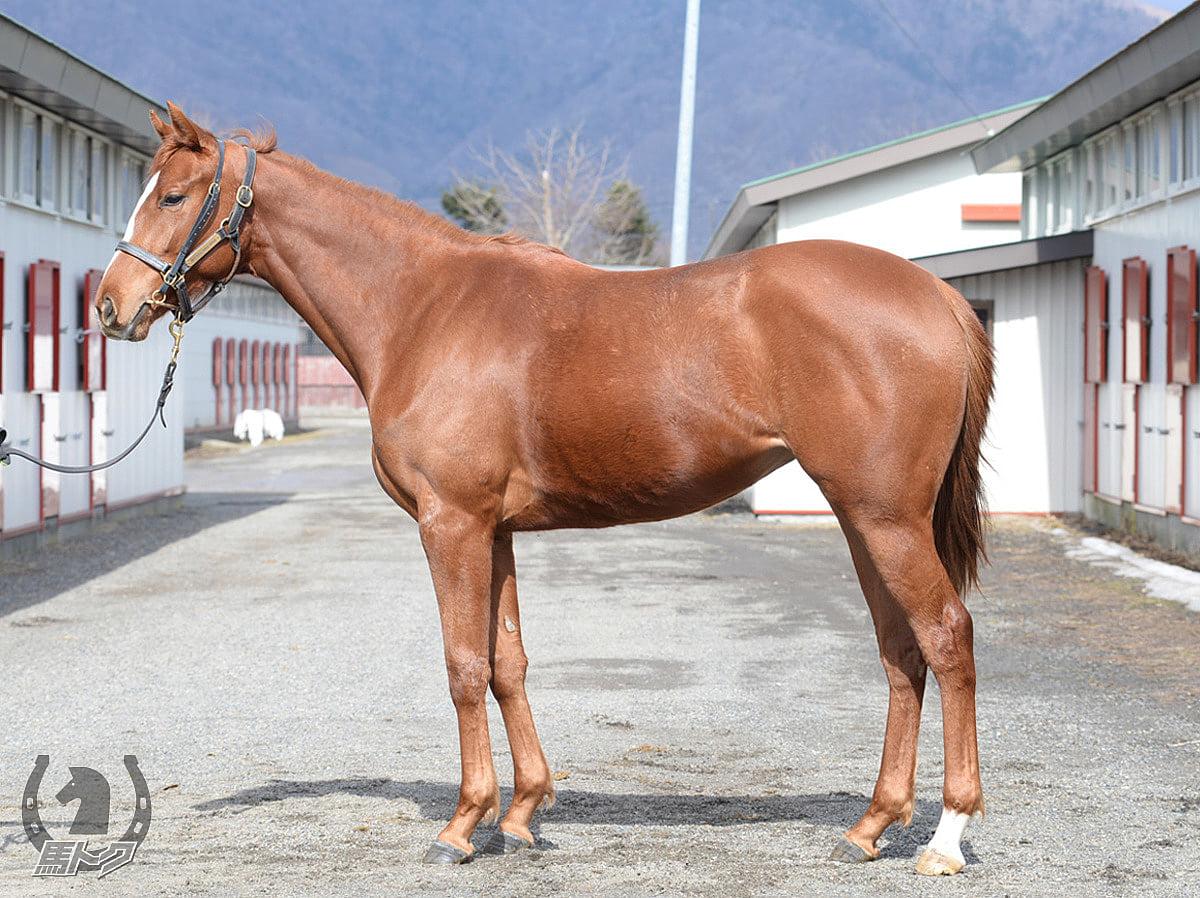 カテドラルロックの馬体写真