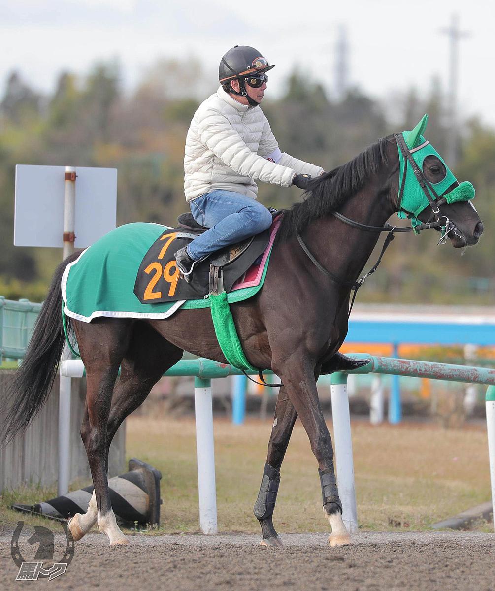 セイウンヴィーナスの馬体写真