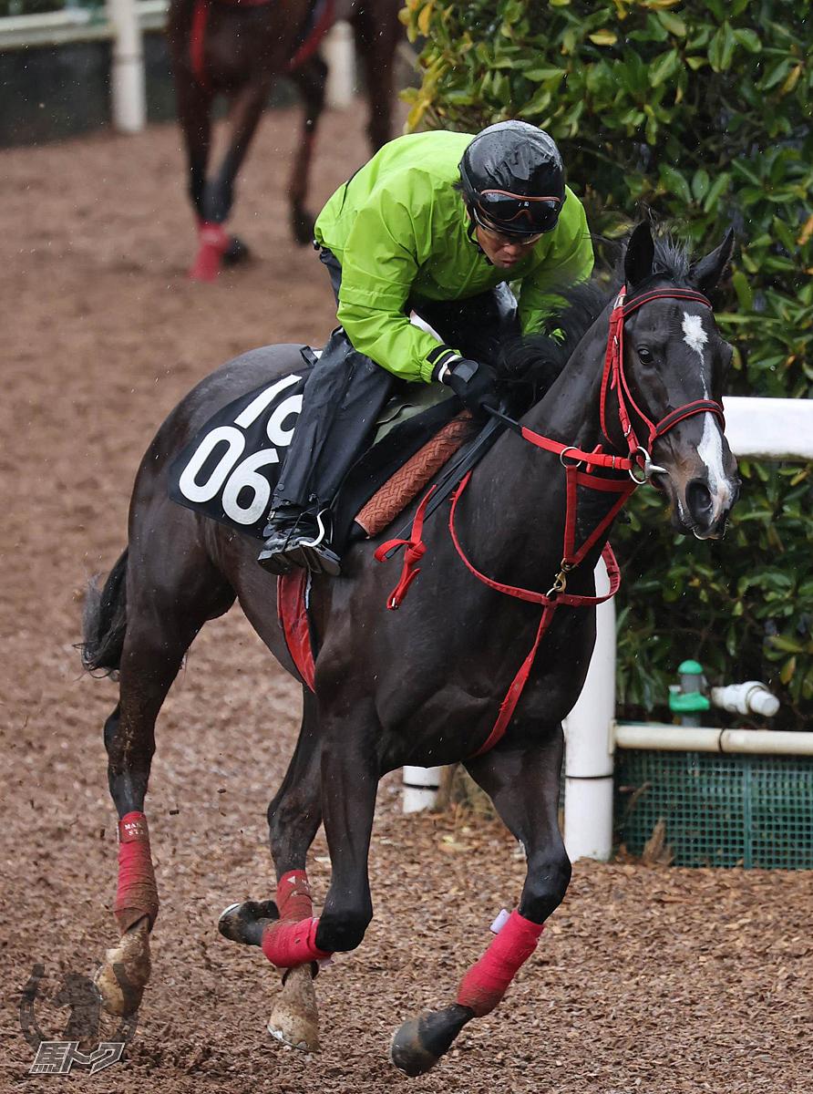 デンタルバルーンの馬体写真