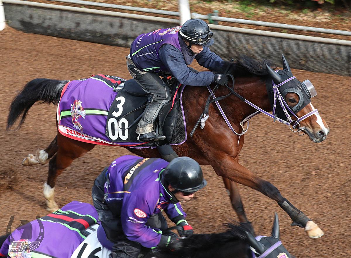 キムケンドリームの馬体写真