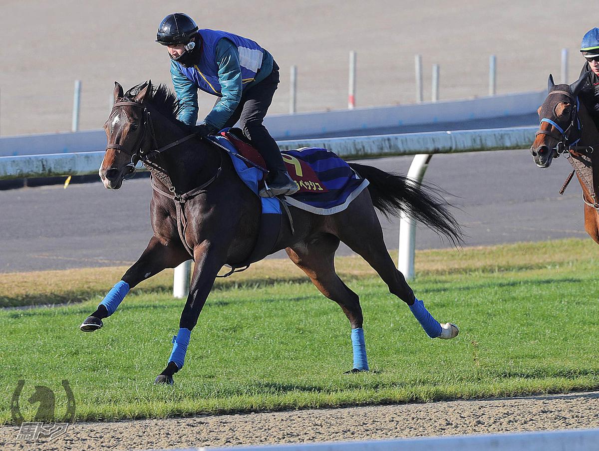 ジェラペッシュの馬体写真