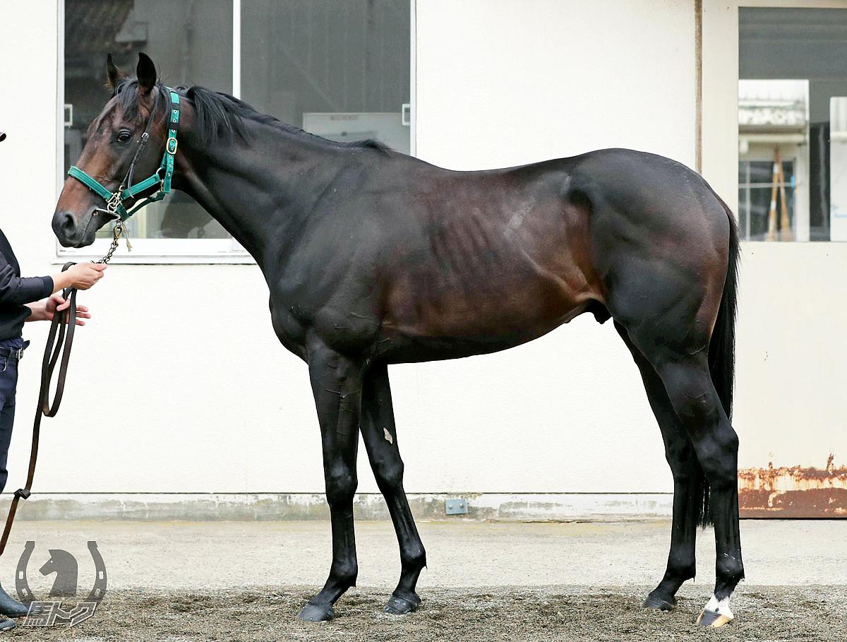 ブラックホールの馬体写真