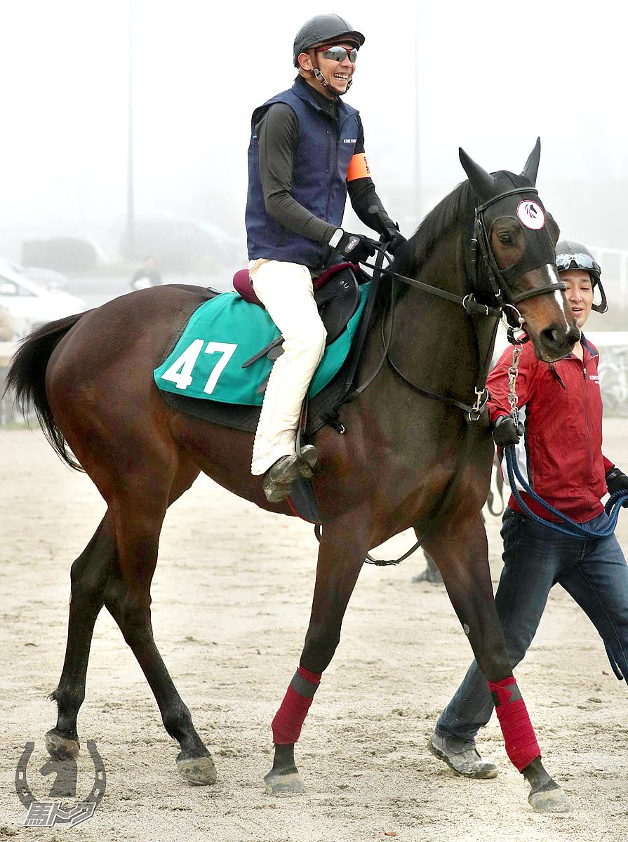 ペプチドサクラの馬体写真