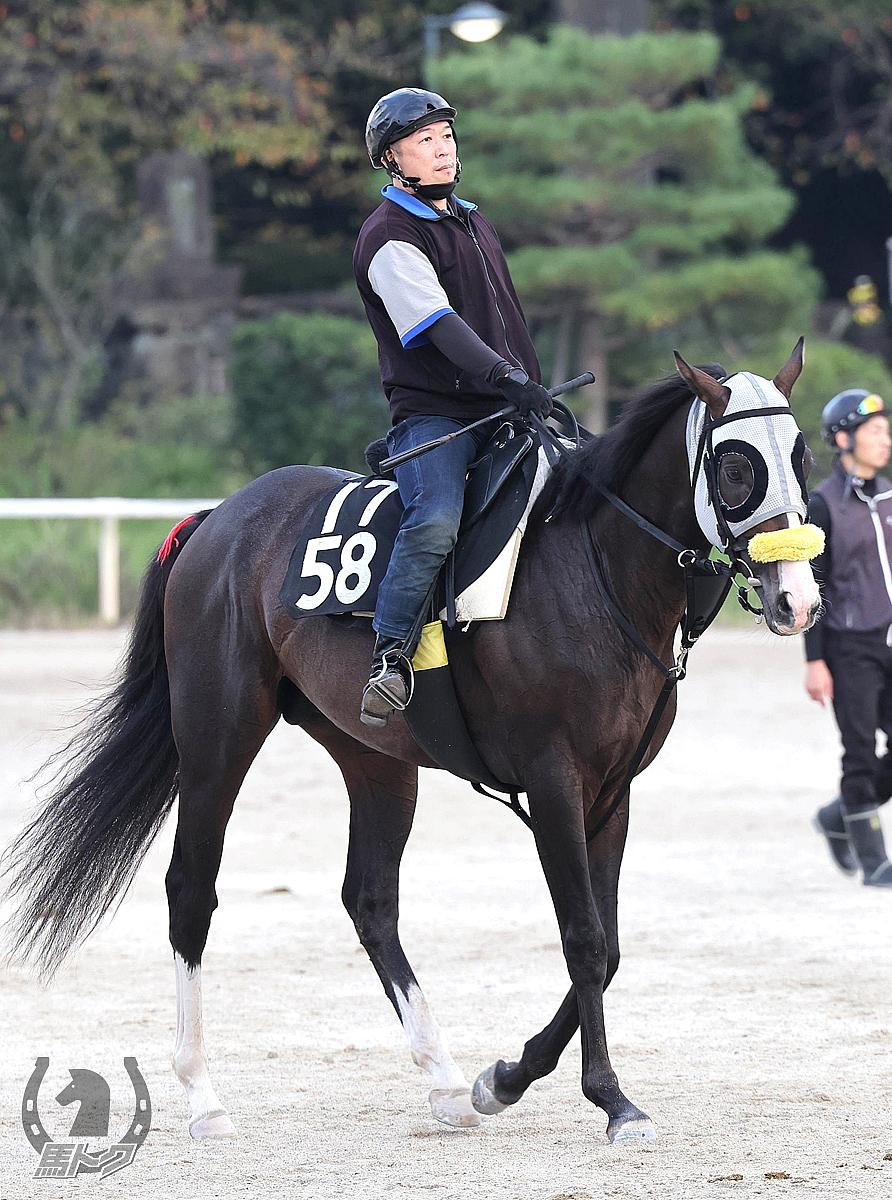 エンデュミオンの馬体写真