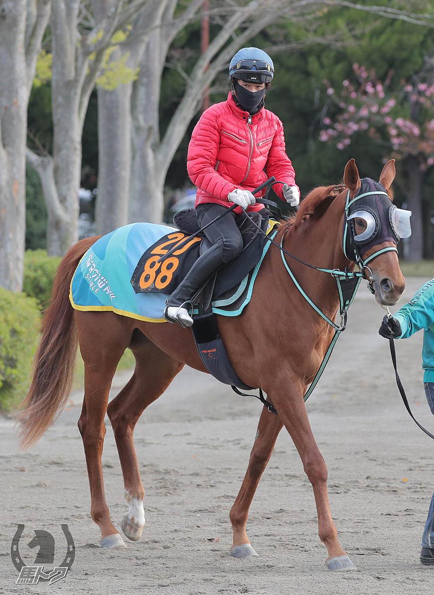 レッドサーシャの馬体写真