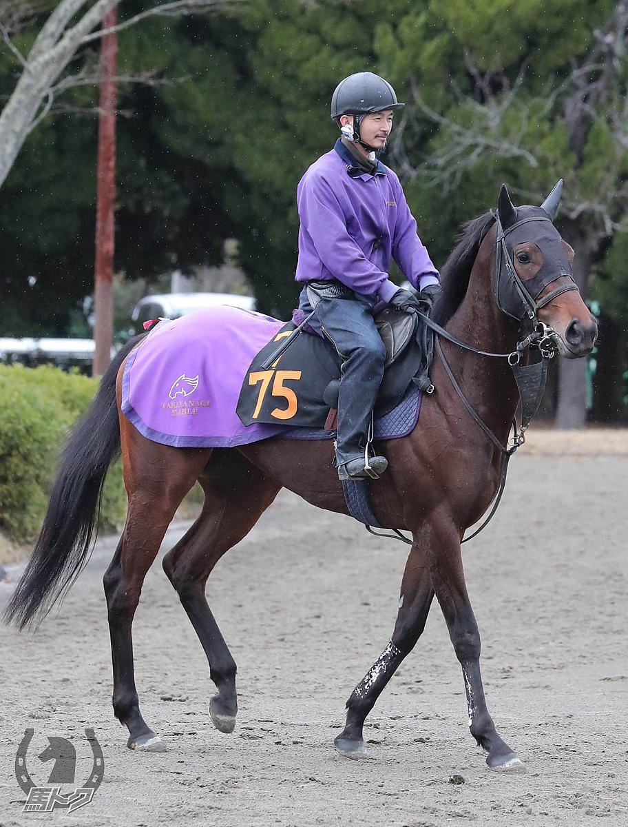 ソーユーフォリアの馬体写真