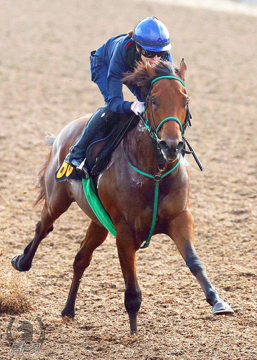 グレイトホーンの馬体写真