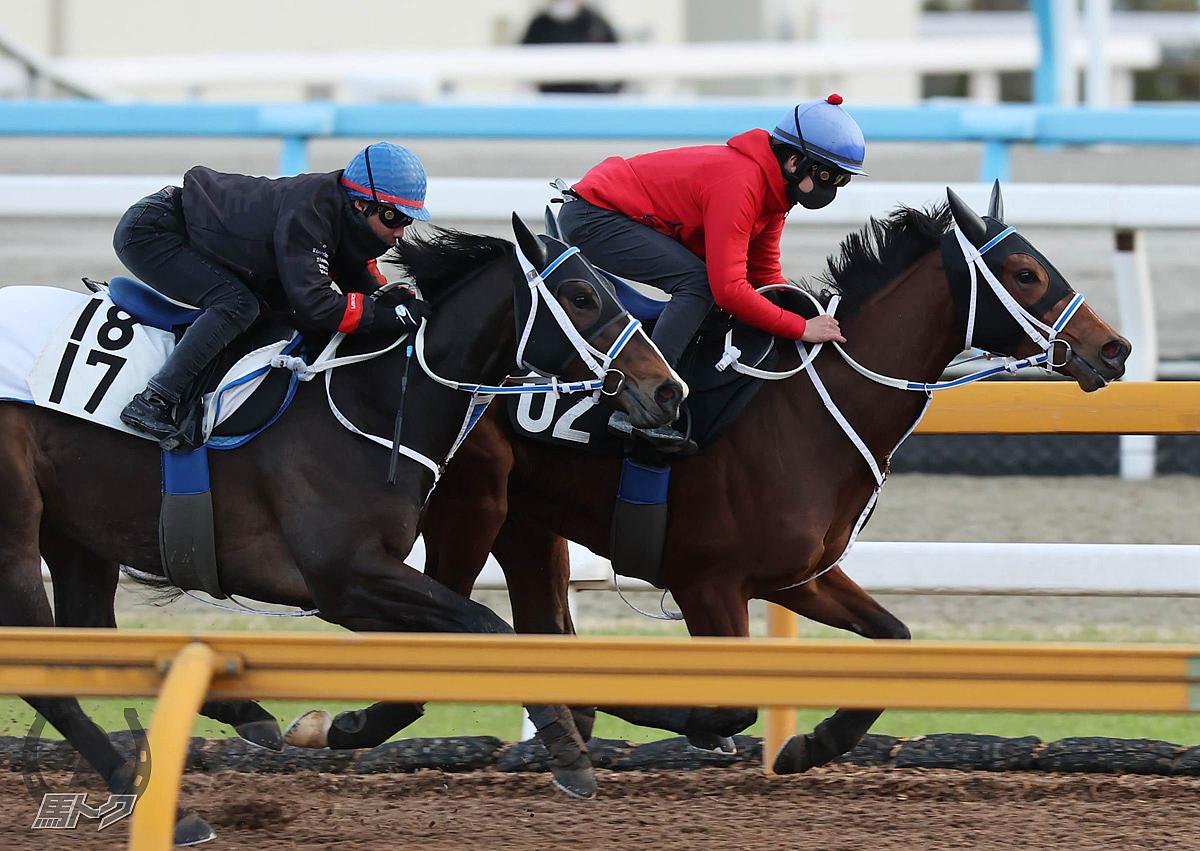 ソングオブザハートの馬体写真