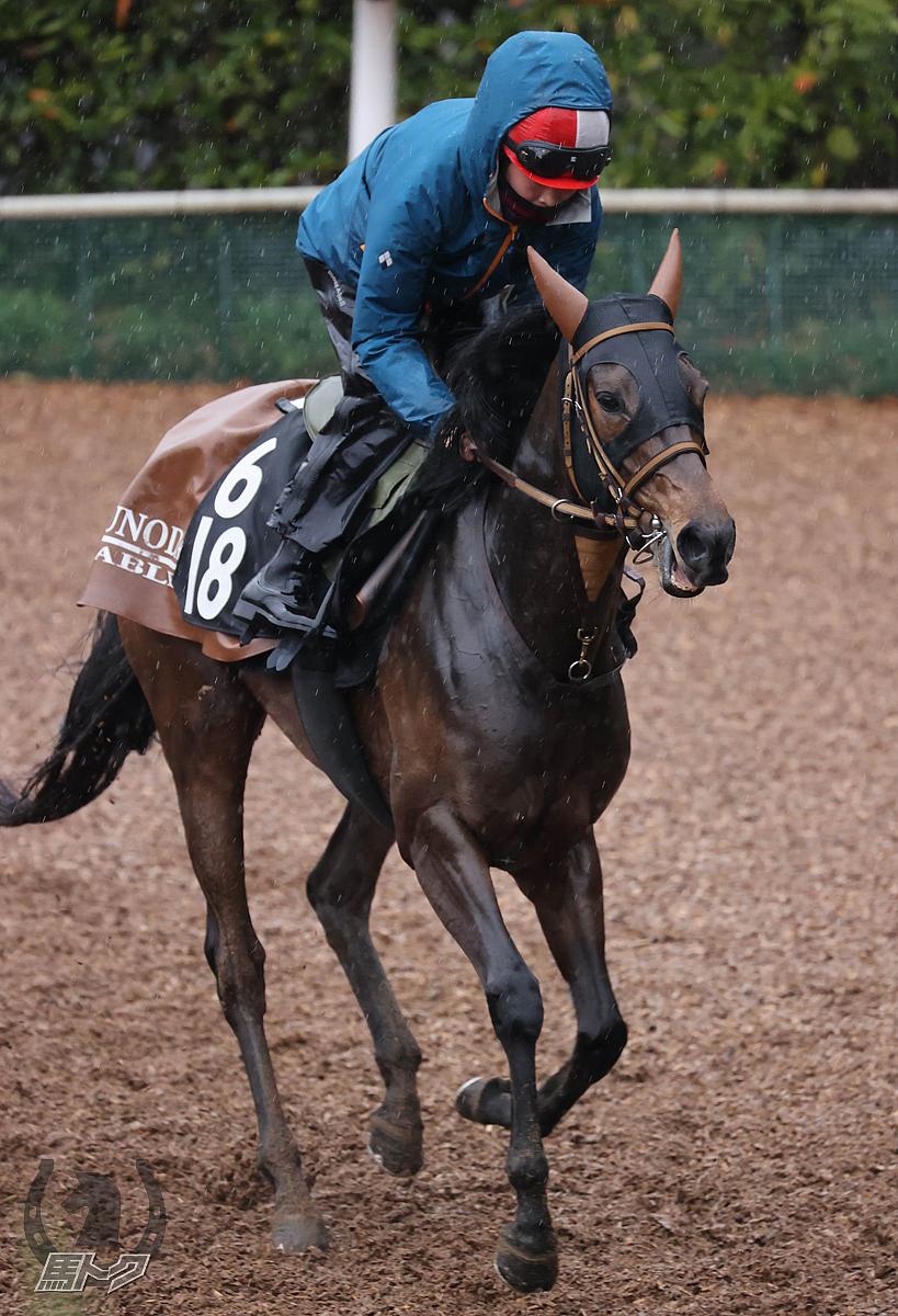 ソフィアバローズの馬体写真