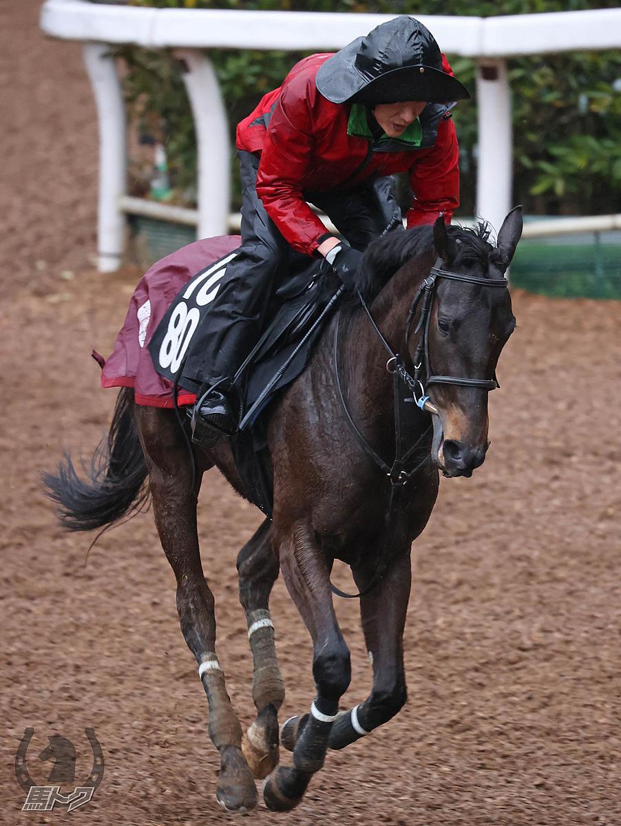 マテンロウディーバの馬体写真