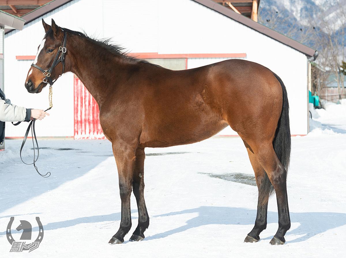 クイーンズバラッドの馬体写真