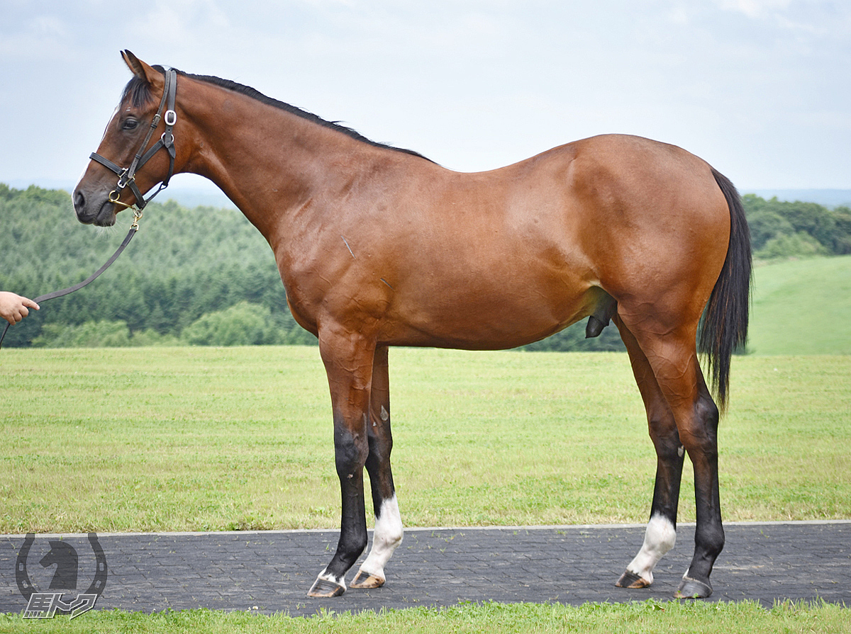 シェノンの馬体写真
