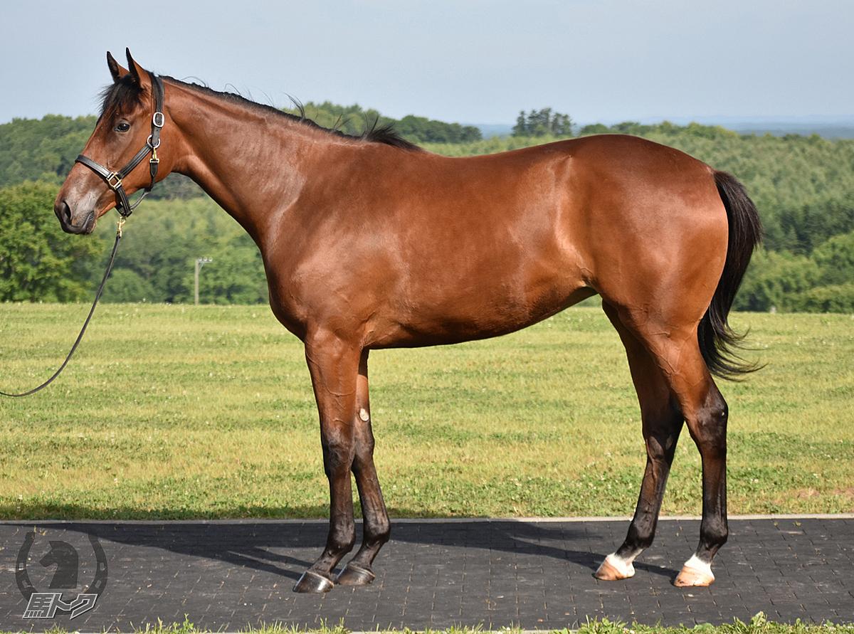 テイストオブハニーの馬体写真