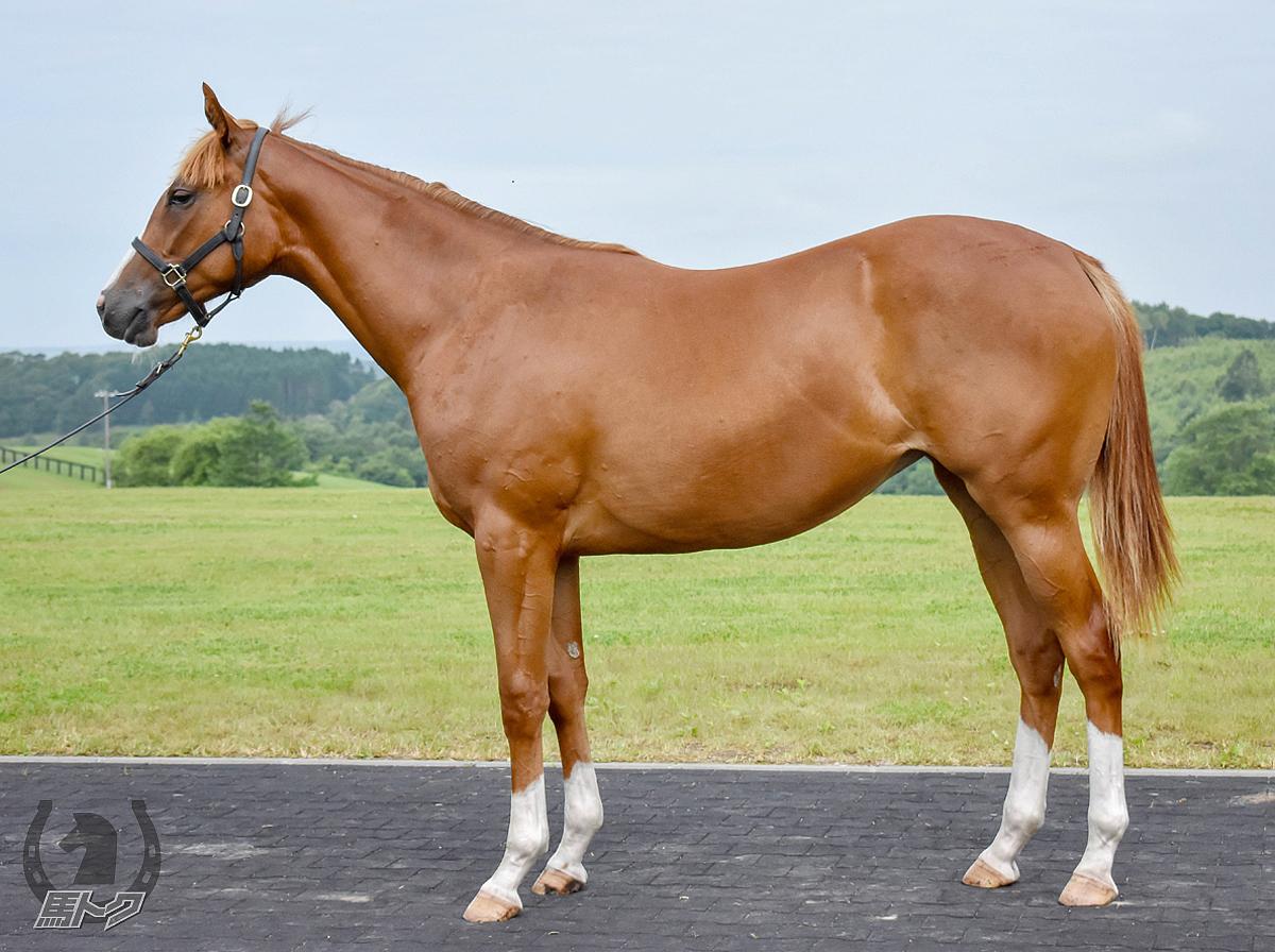 セルフィーの馬体写真