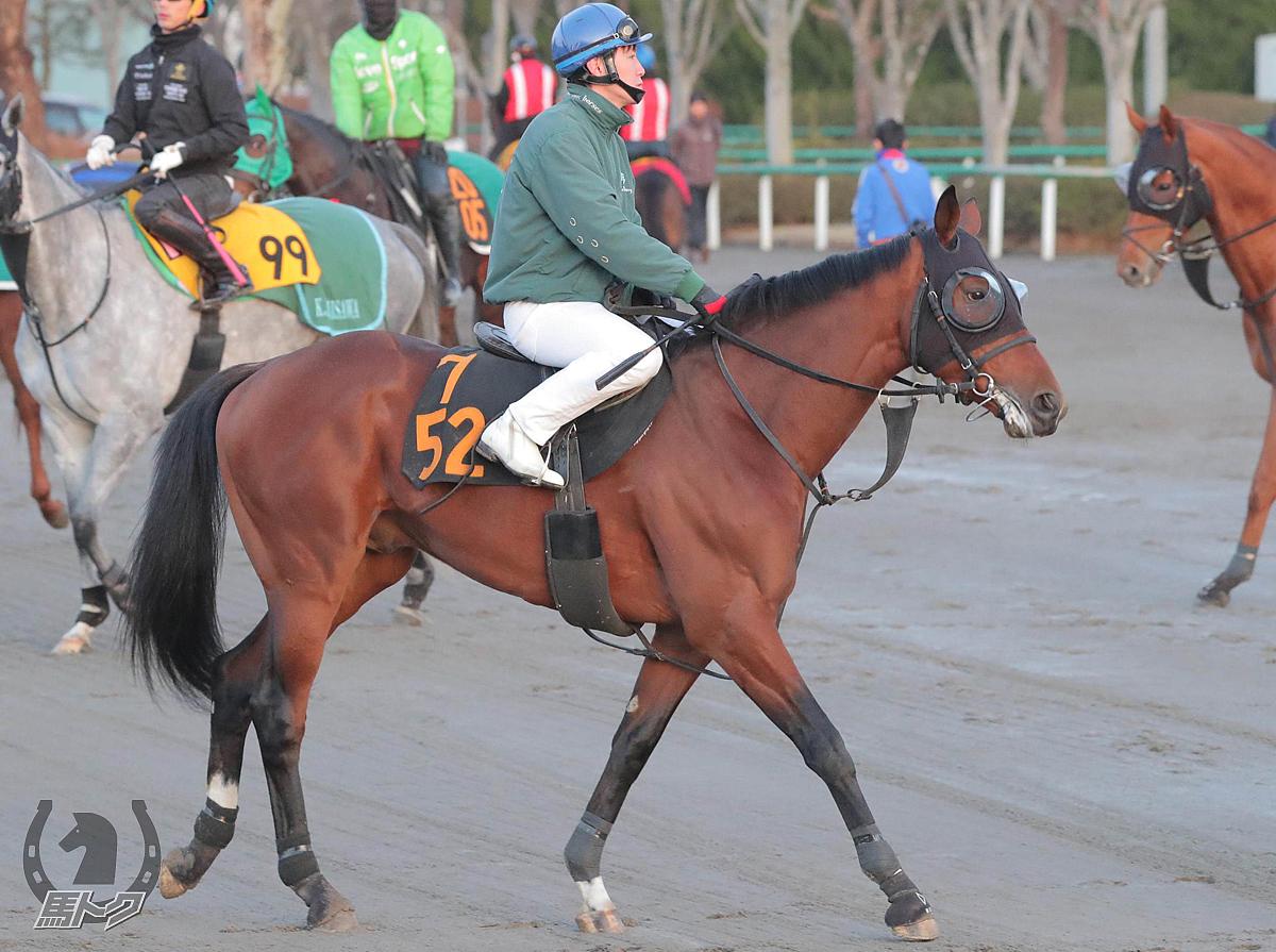 ゼノヴァースの馬体写真