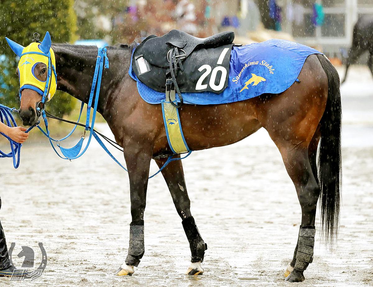 ヴァラークラウンの馬体写真