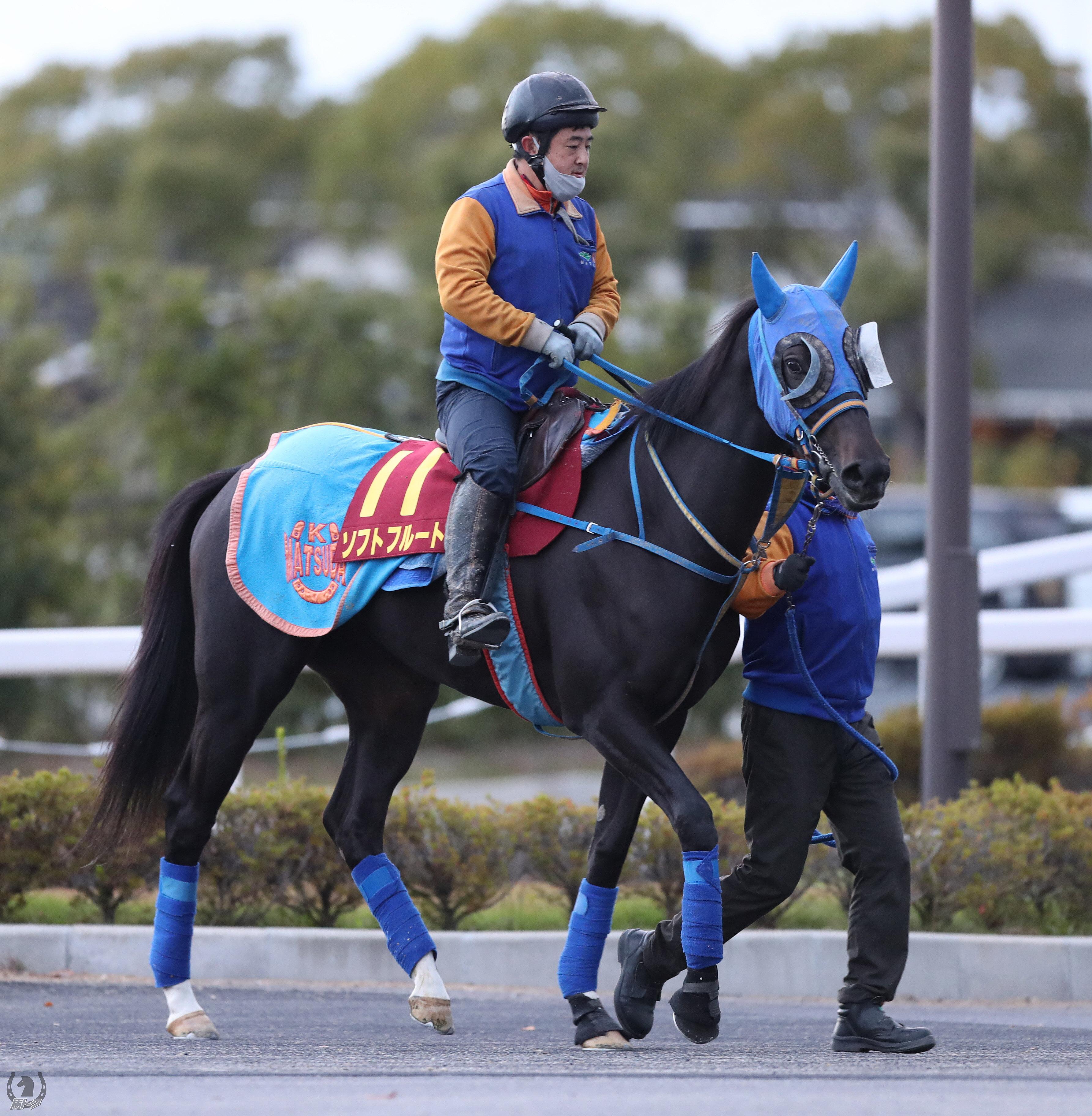 ソフトフルートの馬体写真