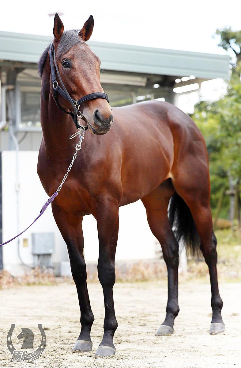 ギベルティの馬体写真