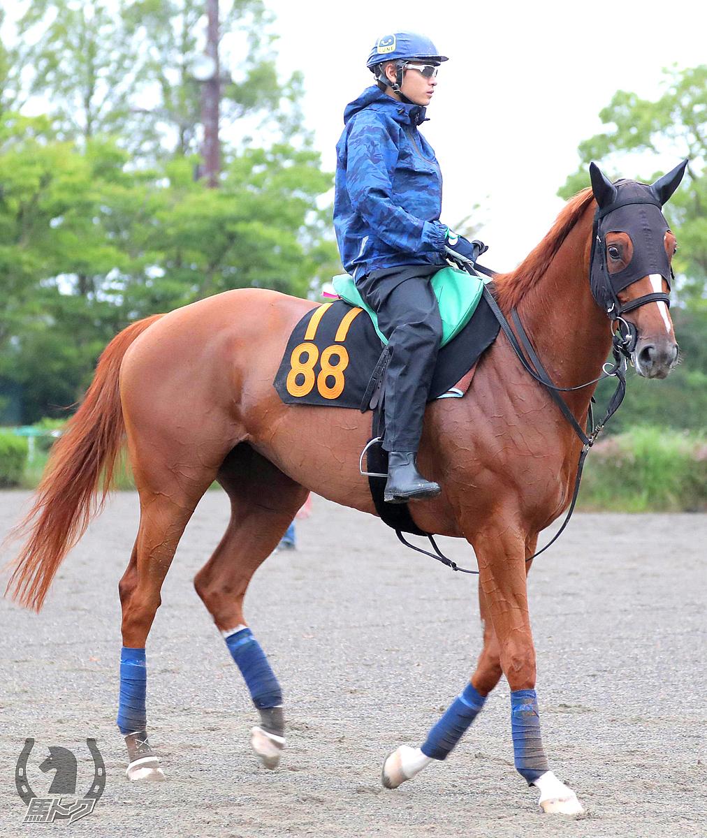 ブランクチェックの馬体写真