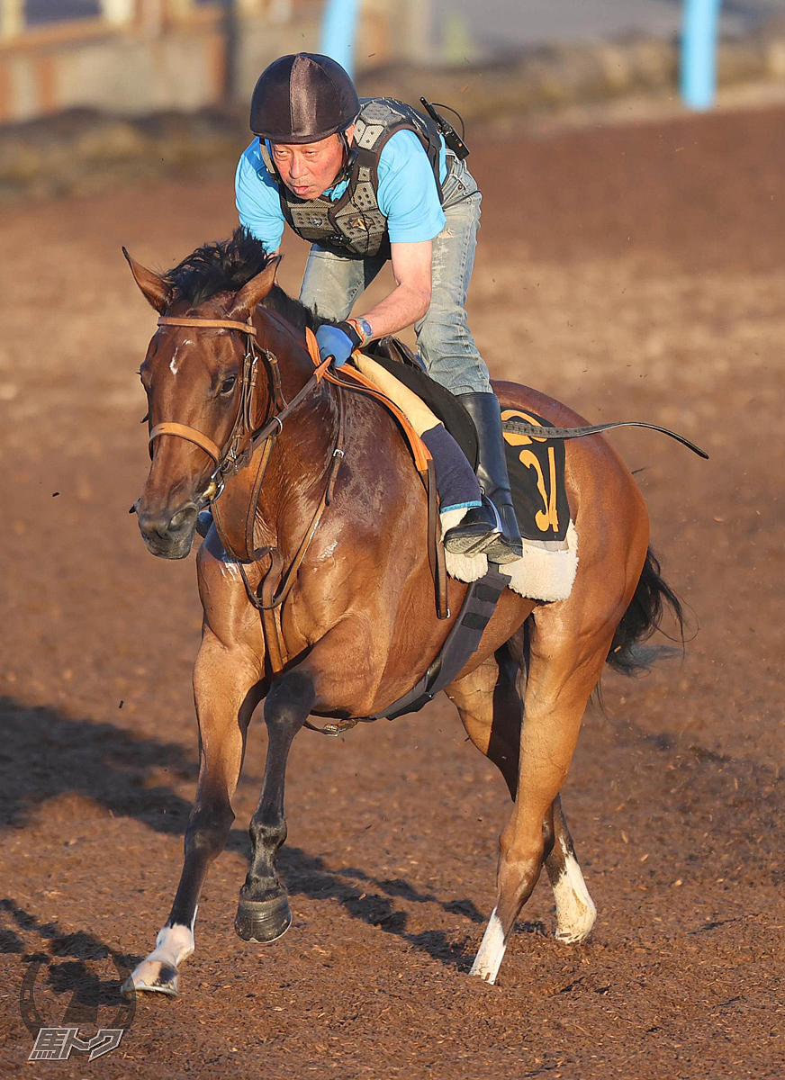 トラストワージーの馬体写真