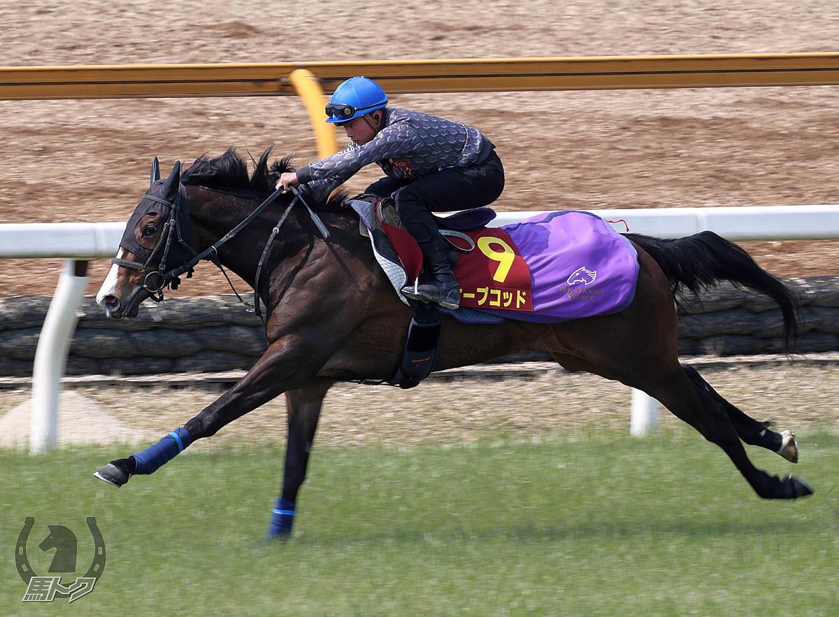 ケープコッドの馬体写真