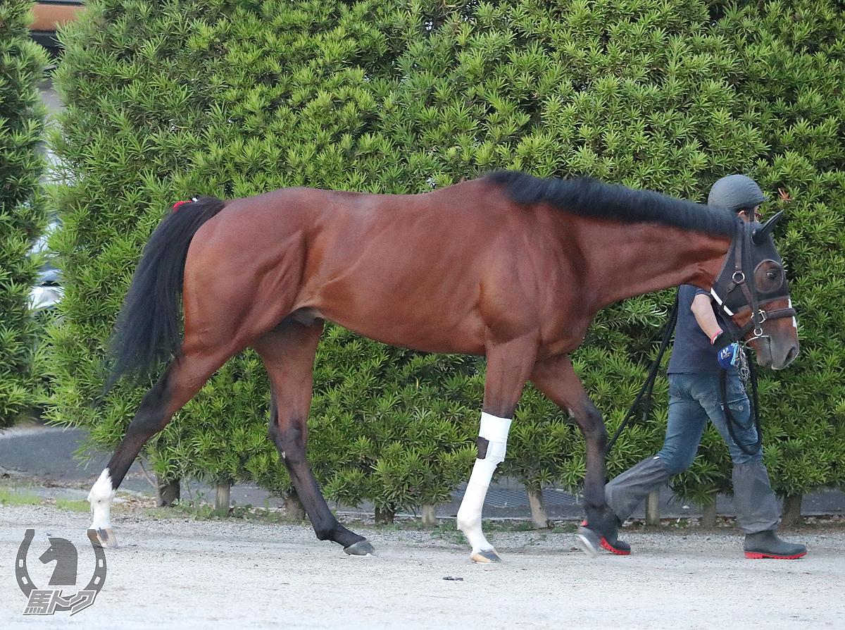 アルサトワの馬体写真