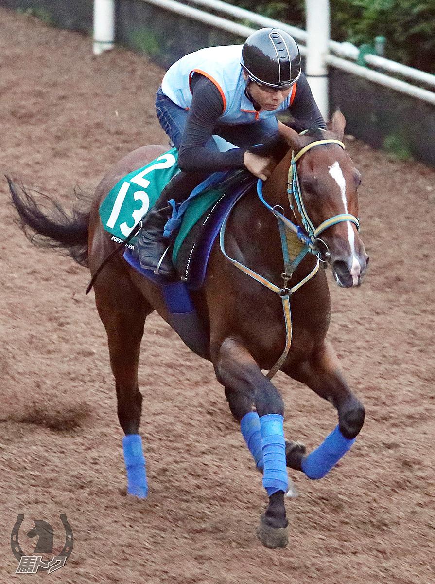 ウーマンズハートの馬体写真